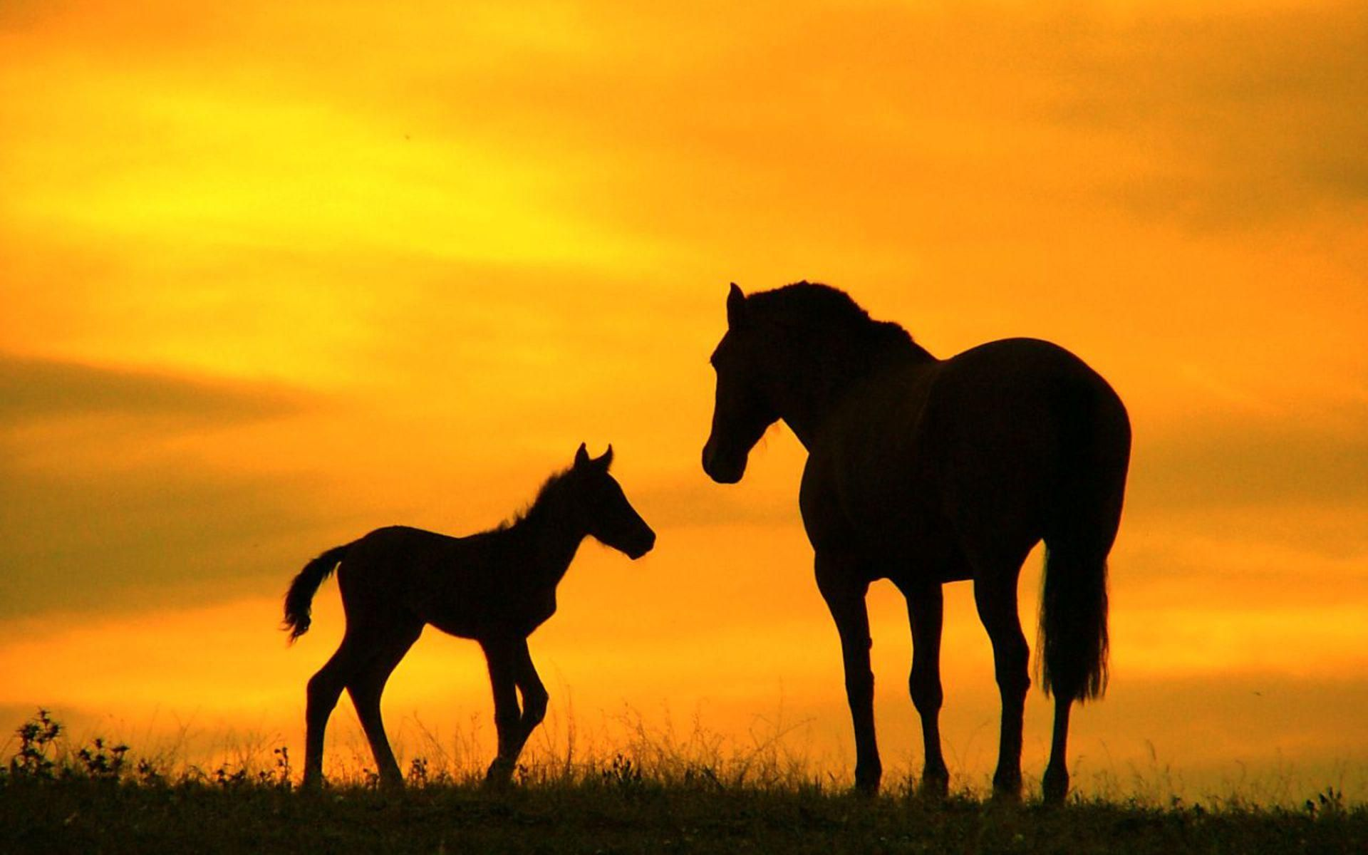 Cool Mommy Baby Horses In Sunset Wallpaper