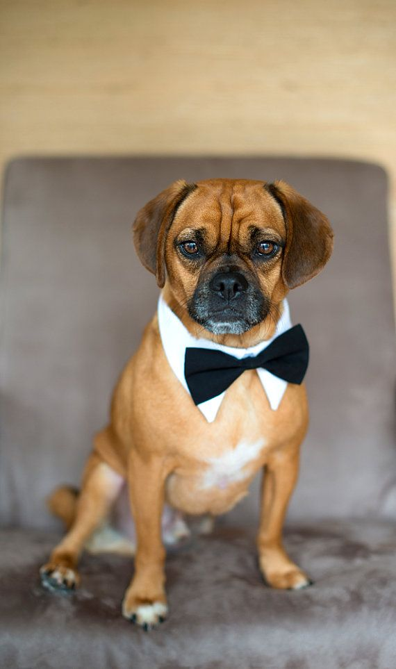 Designer Dog White Tuxedo Shirt Collar And Bow Tie By Usagiteam Wedding Accessories
