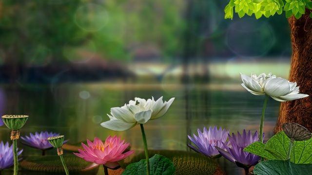 3д обои цветы на рабочий стол   Кувшинки, Природа, Обои