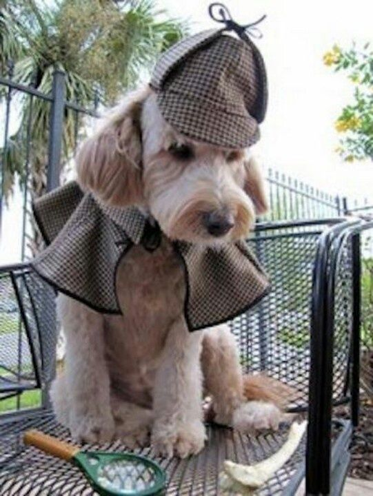 Pin By Regina Andrews On Pet Fashion Statements With Images