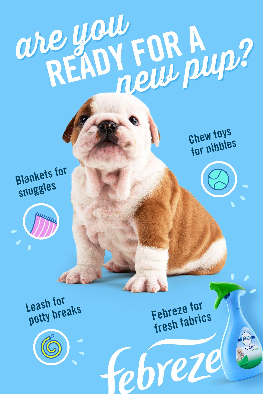 New Dog, New Stinks: Stay Fresh with Febreze