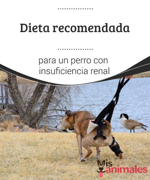 Dieta para perros con insuficiencia renal aguda