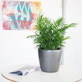 Pet friendly houseplants for cats & dogs My city plants at ...#cats #city #dogs #friendly #houseplants #pet #plants