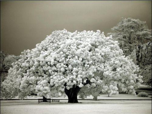 Gorgeous!Greait,natur,.