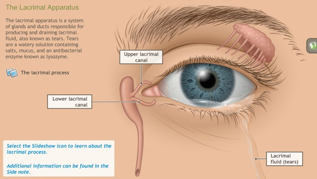 The lacrimal apparatus and tear lacrimal fluid | Anatomy note world ...