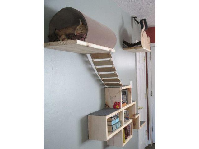 31++ Parcours pour chat interieur inspirations
