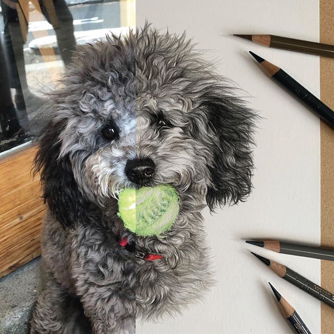A portrait you may remember from September last year this curly cutie is toy poodle Norman and here he is being given