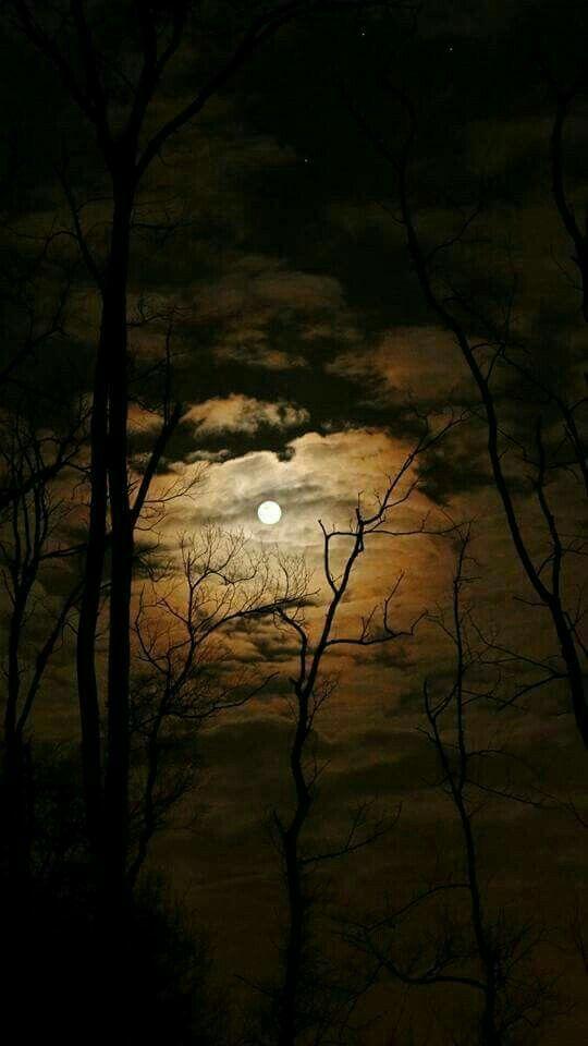 Pin By On Moonlight Feels Right Beautiful Moon Night Landscape Night Skies