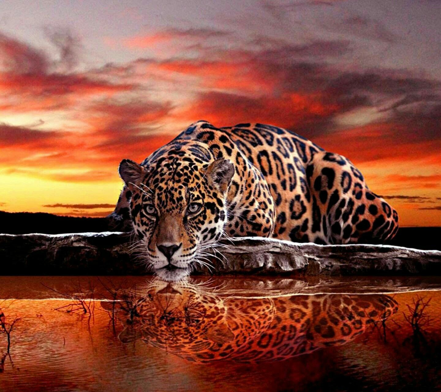 Ferocious Jaguar: Pin By Gamma Digital Studio On Animales