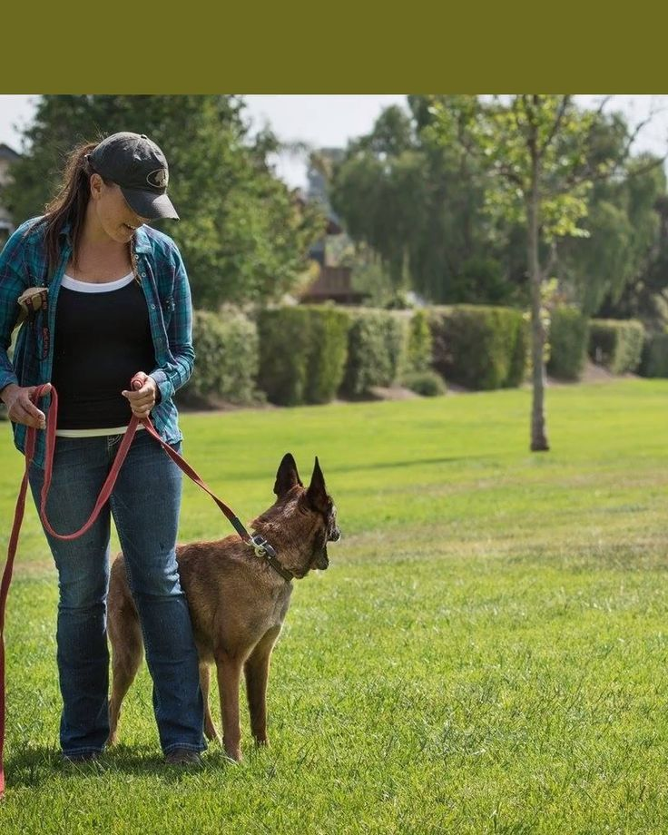 4 steps to teaching your dog loose leash walking in 2020