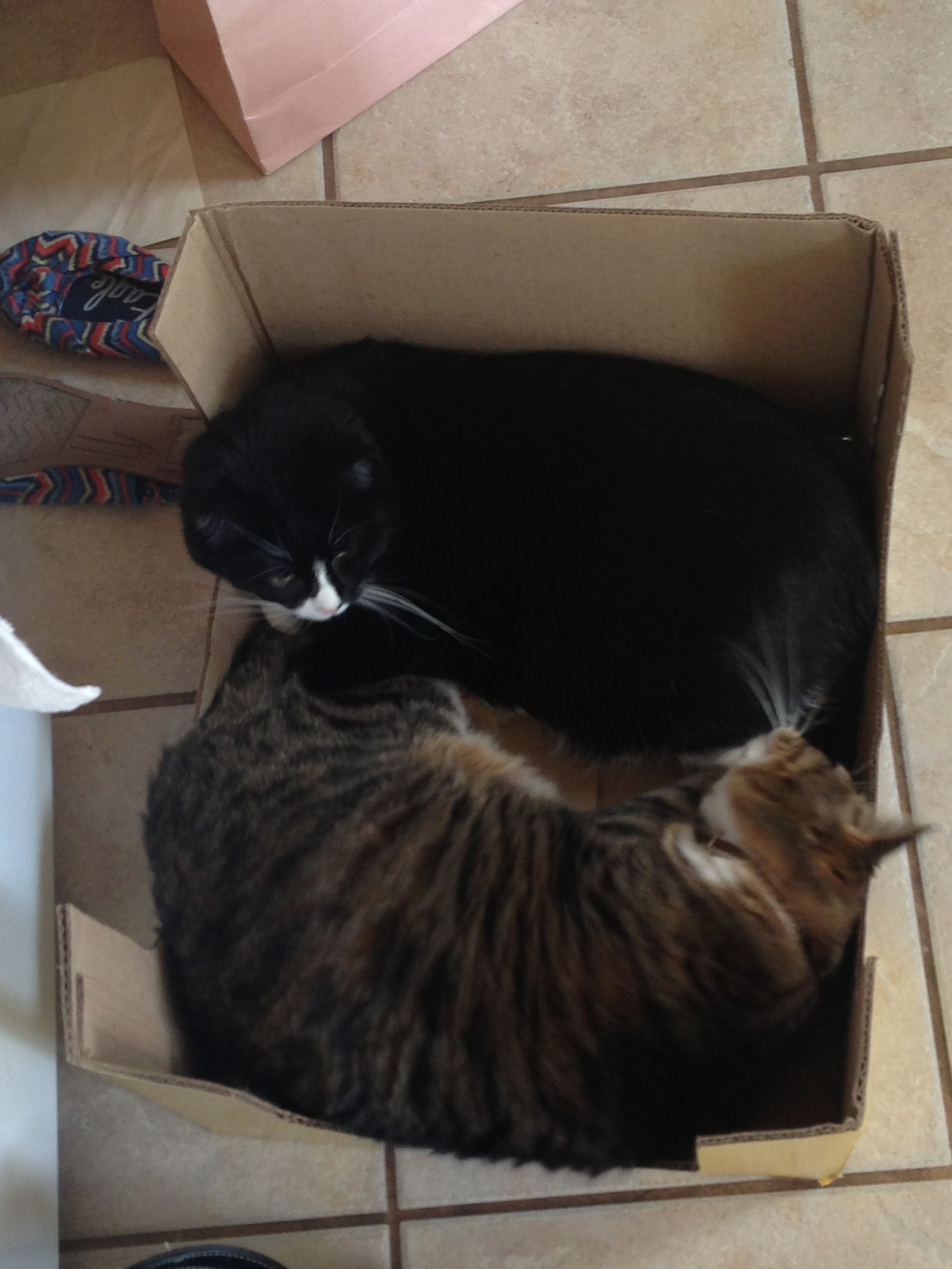 Kitty's love boxes!