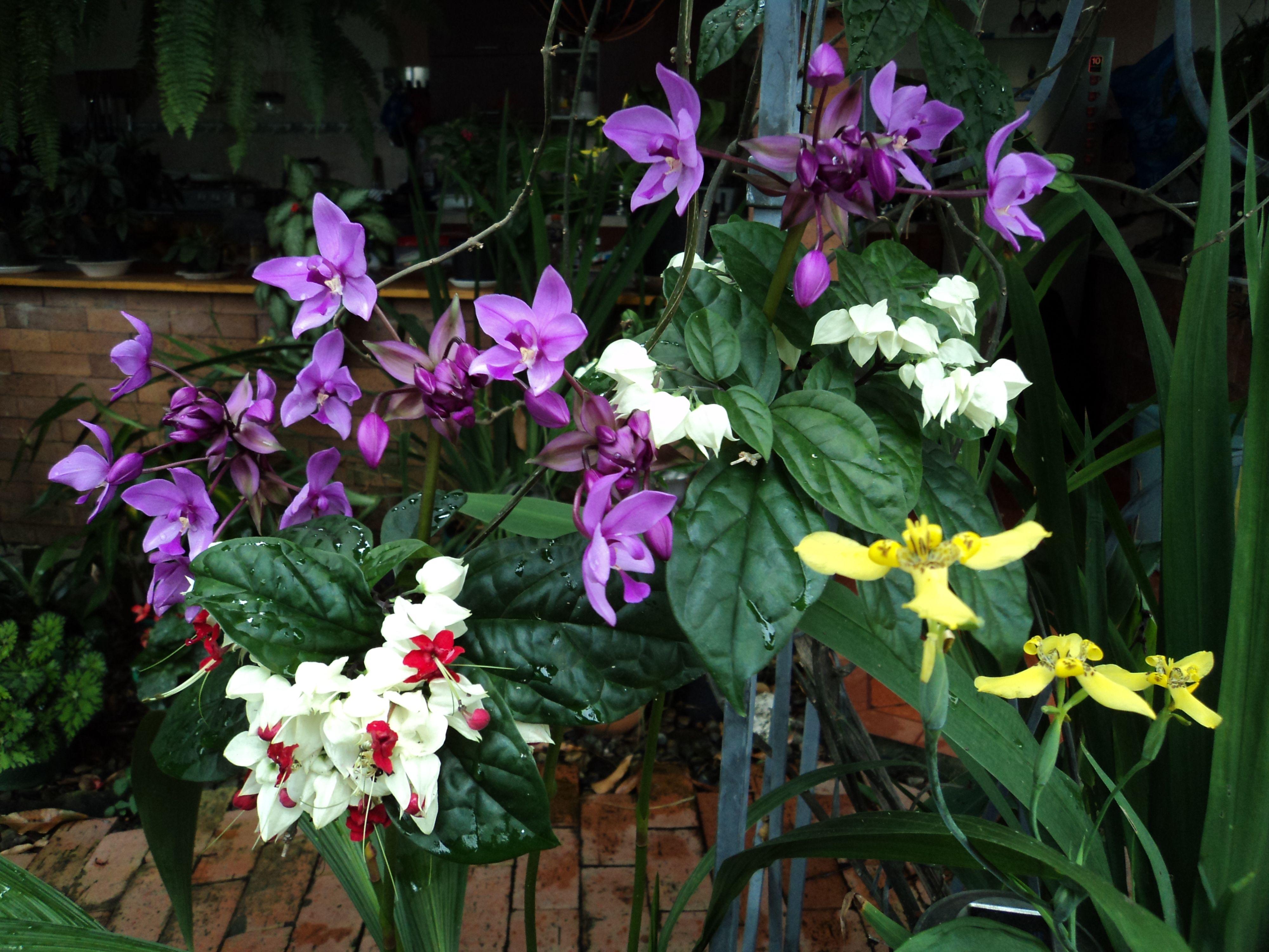 Encantador Uñas Montículo Flor Del Balneario Embellecimiento - Ideas ...
