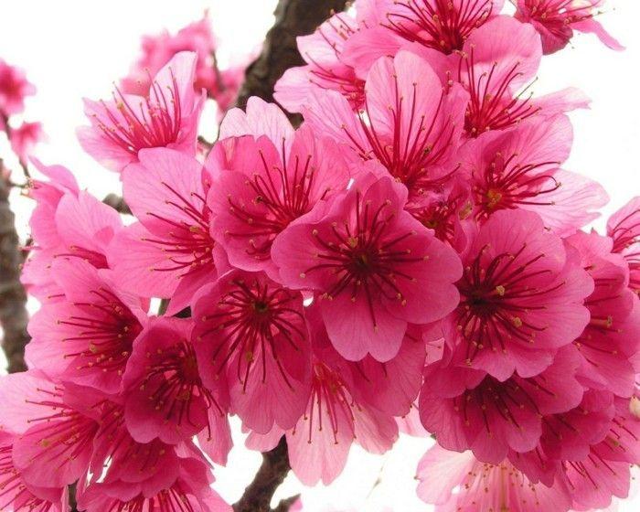 Fonds d 39 cran printemps qui vont inspirer votre journ e for Image de fond ecran qui bouge gratuit