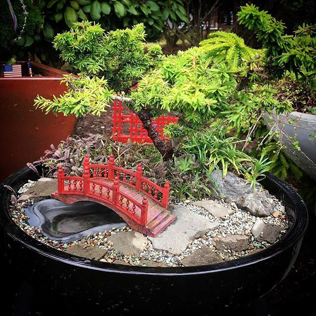 Reasons To Garden In Miniature You Can Make A Little Slice Of Heaven That You Can Call Your Very Miniature Zen Garden Miniature Garden Japanese Garden Plants