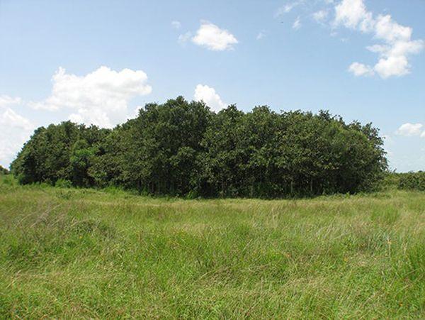 Post Oak Motte On Katy Prairie Landscape Prairie Plants