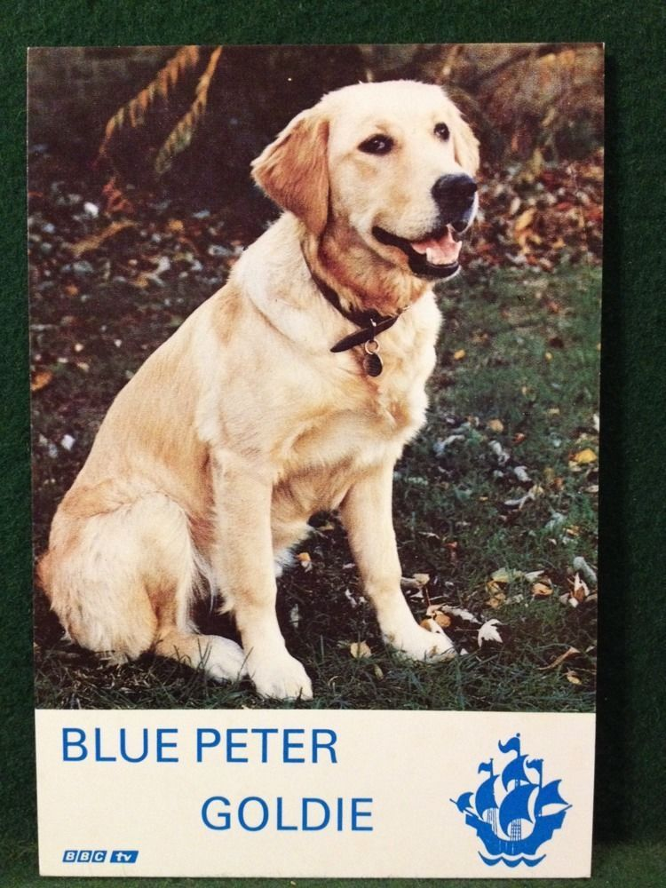 Blue Peter Dog Goldie 6x4 Photo Card More Listed
