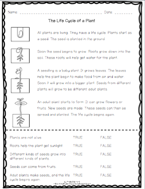 FREE Life Cycle of a Plant Reading Passage with Comprehension ...