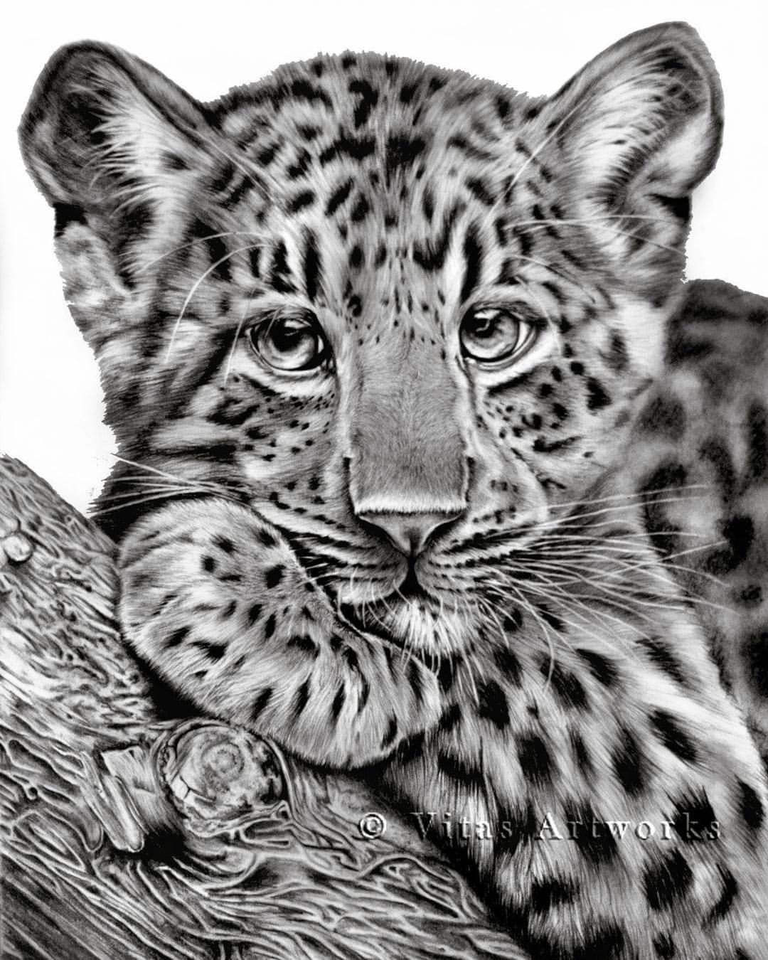 babyleopard bleistift graphite a3 from 2013 leopard leoparddrawing malen zeichnen. Black Bedroom Furniture Sets. Home Design Ideas