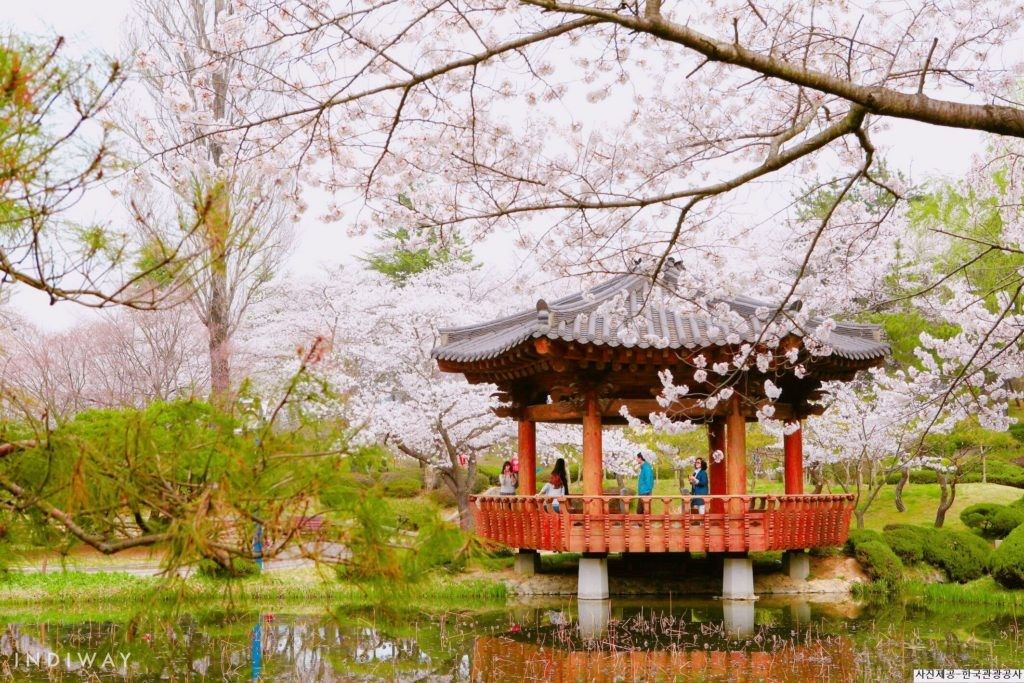 2019 Update Best Time And Place To See Cherry Blossoms In Korea