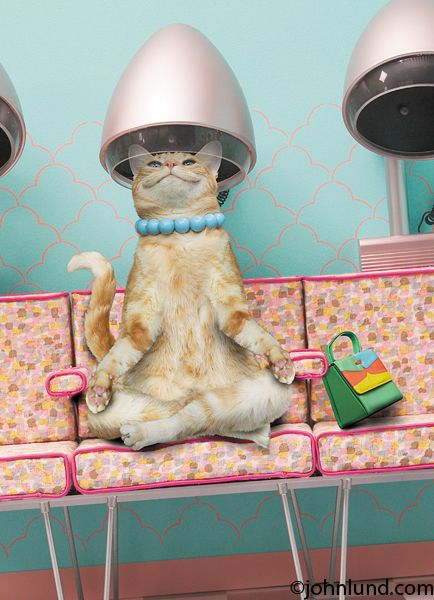 cat hair salon