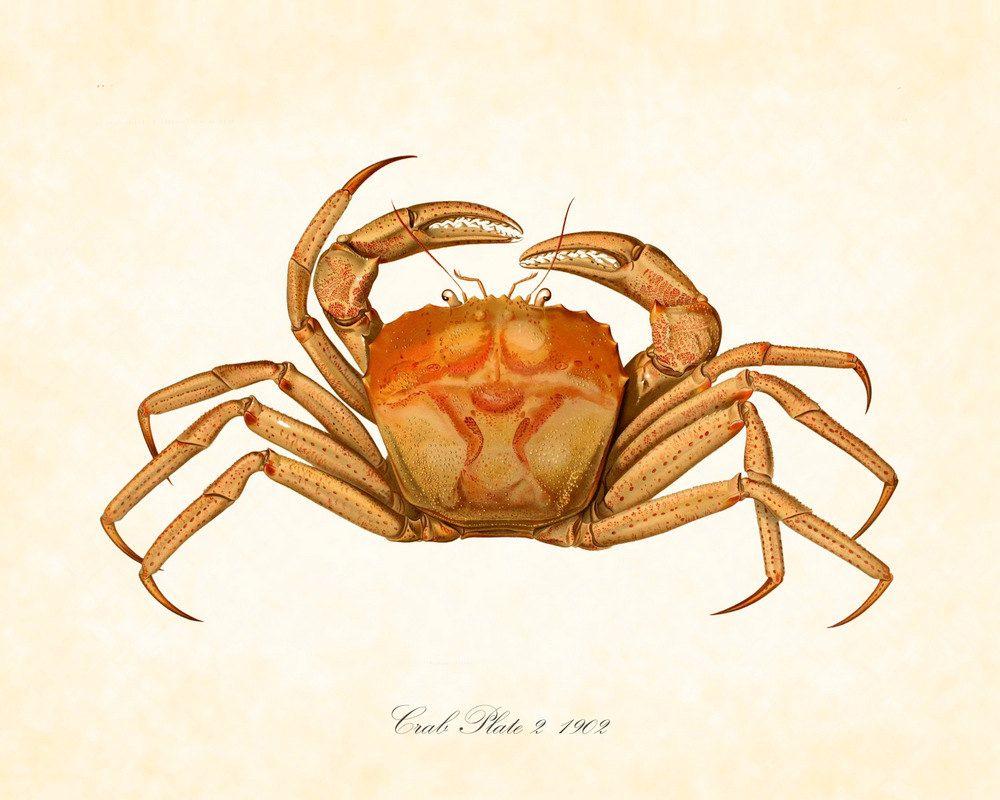 vintage crab illustration astrological and mythological symbols