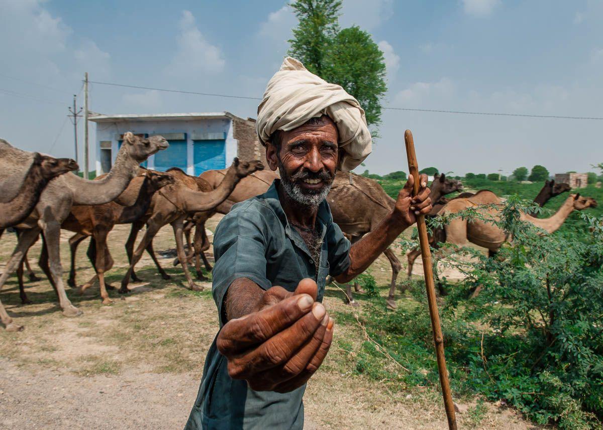 Camel Herder - India