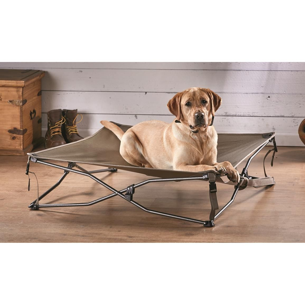 Guide Gear Dura Mesh Elevated Dog Bed in 2020 Elevated