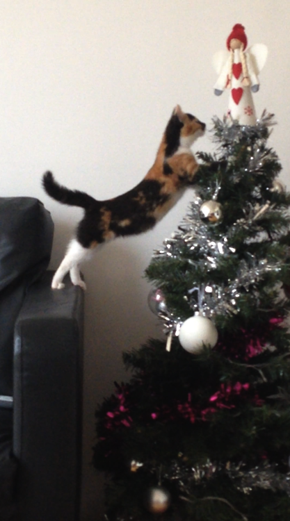 """""""But I should be on top of the tree, I'm da liddle angel!  For more Christmas Cats, visit https://www.facebook.com/funholidaycats"""