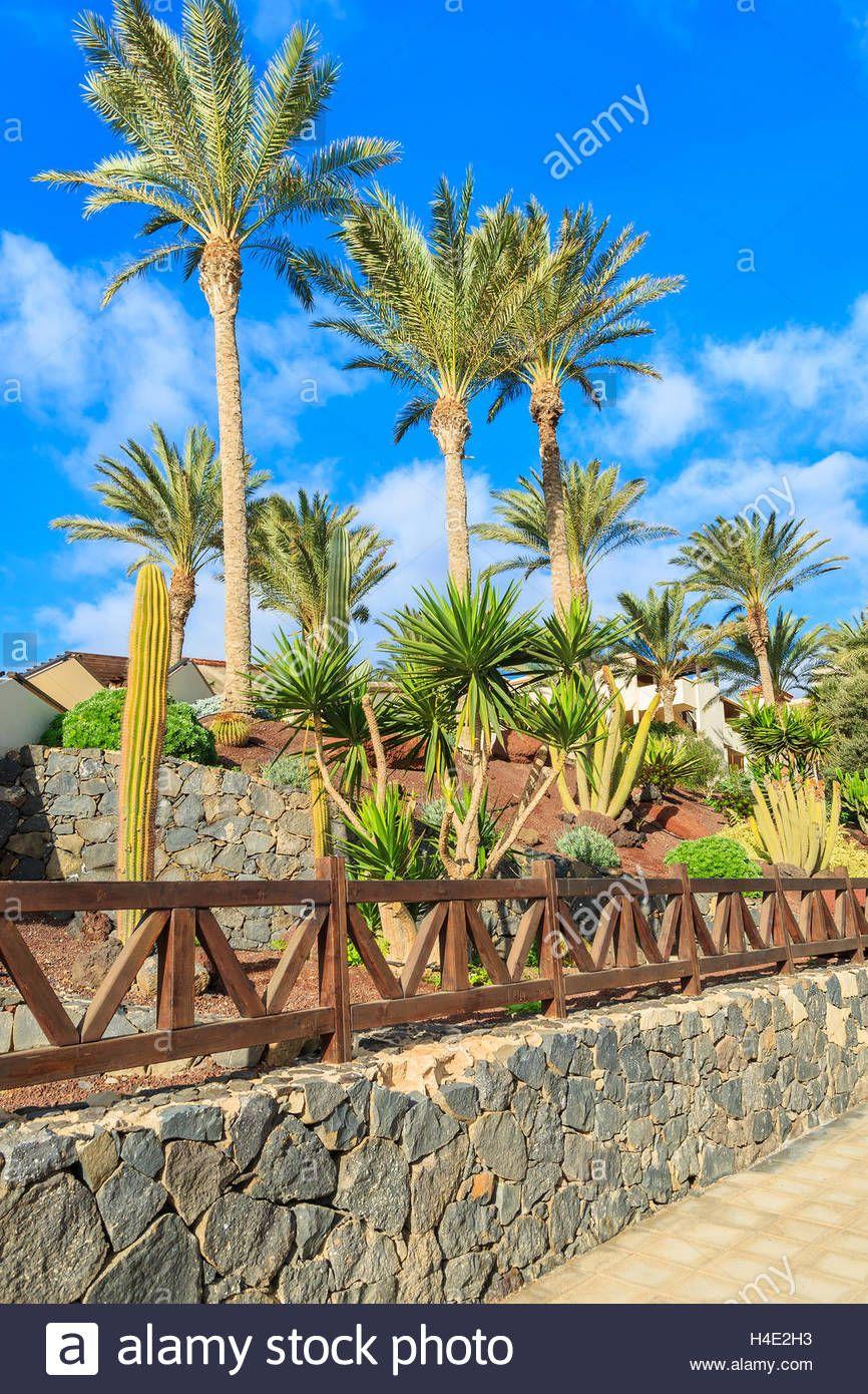 Bildergebnis Fur Palmenarten Garten Palmenarten Garten Palmen