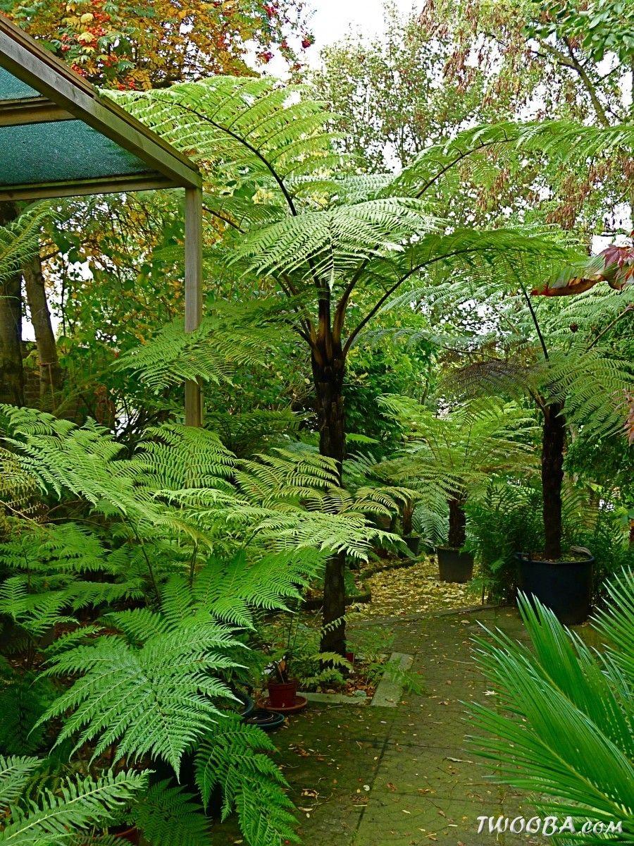 pin by elizabeth bartlett on tropical gardens
