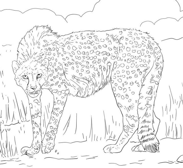 Realistic Cheetah Coloring Pages Animal Coloring Pages Coloring