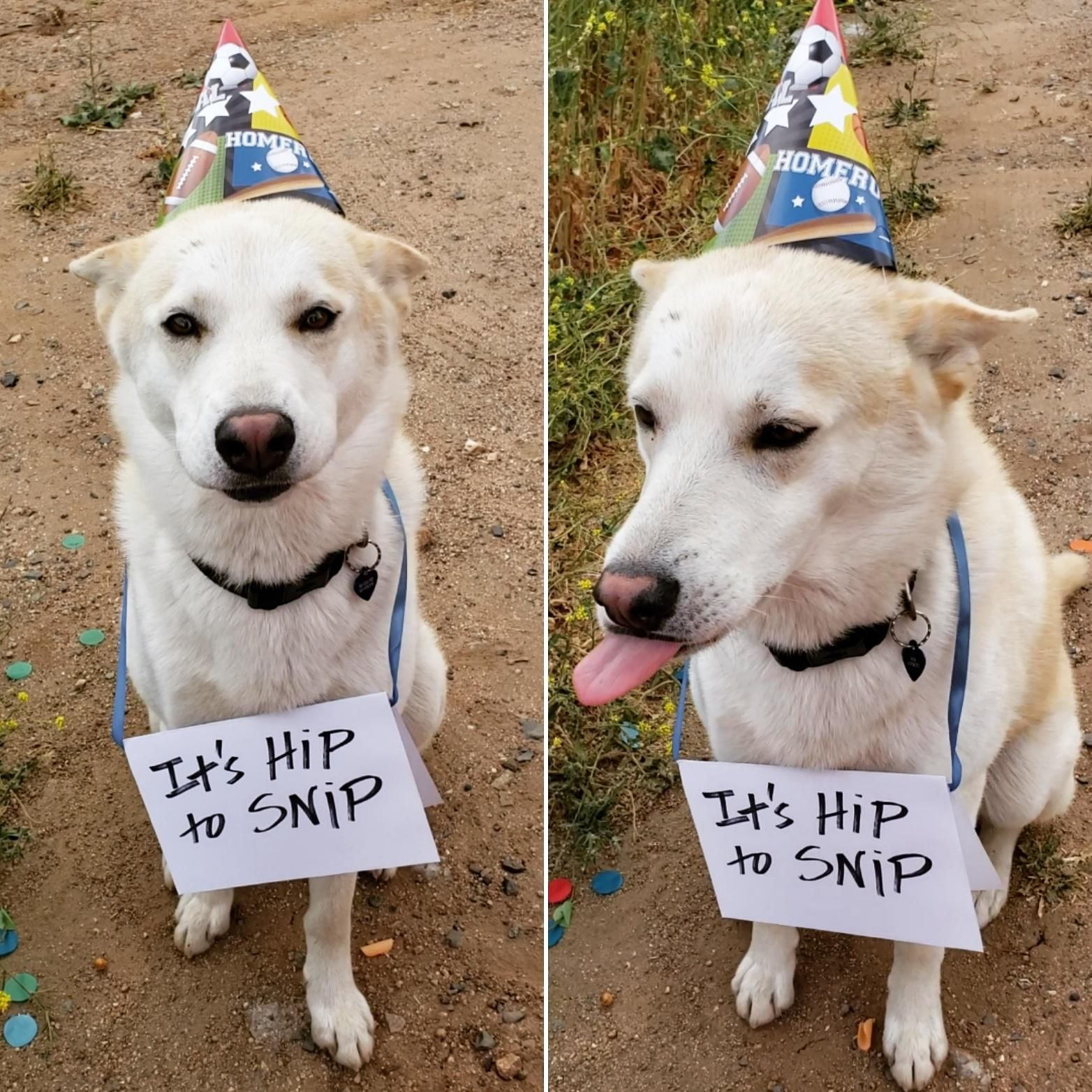 Max Is Getting Neutered Tomorrow So My Friend Threw His Balls A Going Away Party Https Ift Tt 2wmiyiy Neuter Dog Party Corgi Funny
