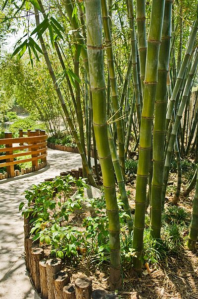 front yard bamboo landscaping designs - Google Search ...