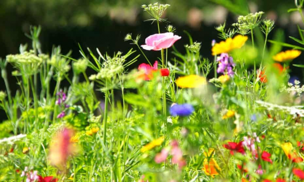 Photo of A wildflower meadow: every inch of soil is waiting for its moment to burst forth…