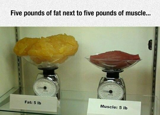 fat vs muscle | the great human body | pinterest | fat vs muscle, Muscles
