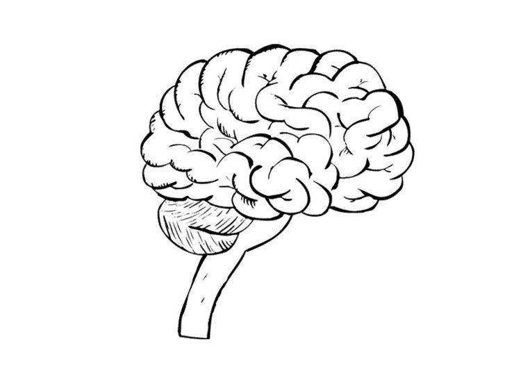 coloring page brain - Brain Coloring Pages To Print