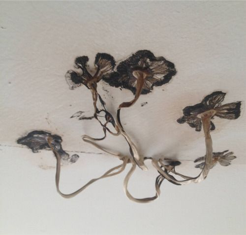 Malformalady Mushrooms Growing Out Of A Bathroom Ceiling Creatures Of The Night Moose Art Stuffed Mushrooms