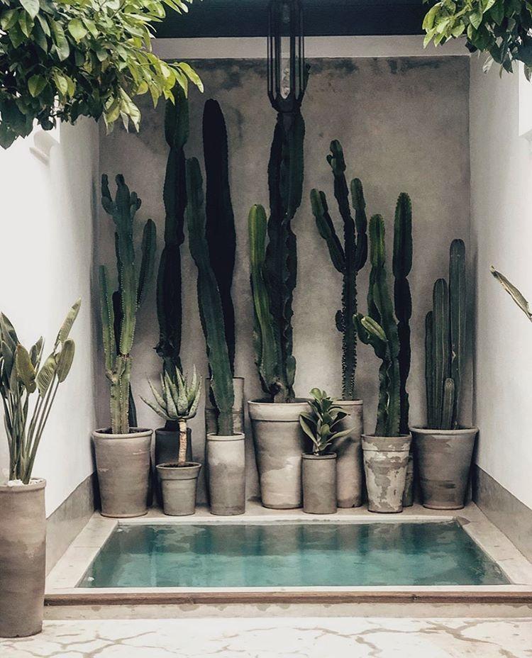 Architecture Design No Instagram La Maison Marrakech La Maison Marrakech Marrakech Morocco Via La Maison Ma In 2020 Planting Flowers Cactus Plants