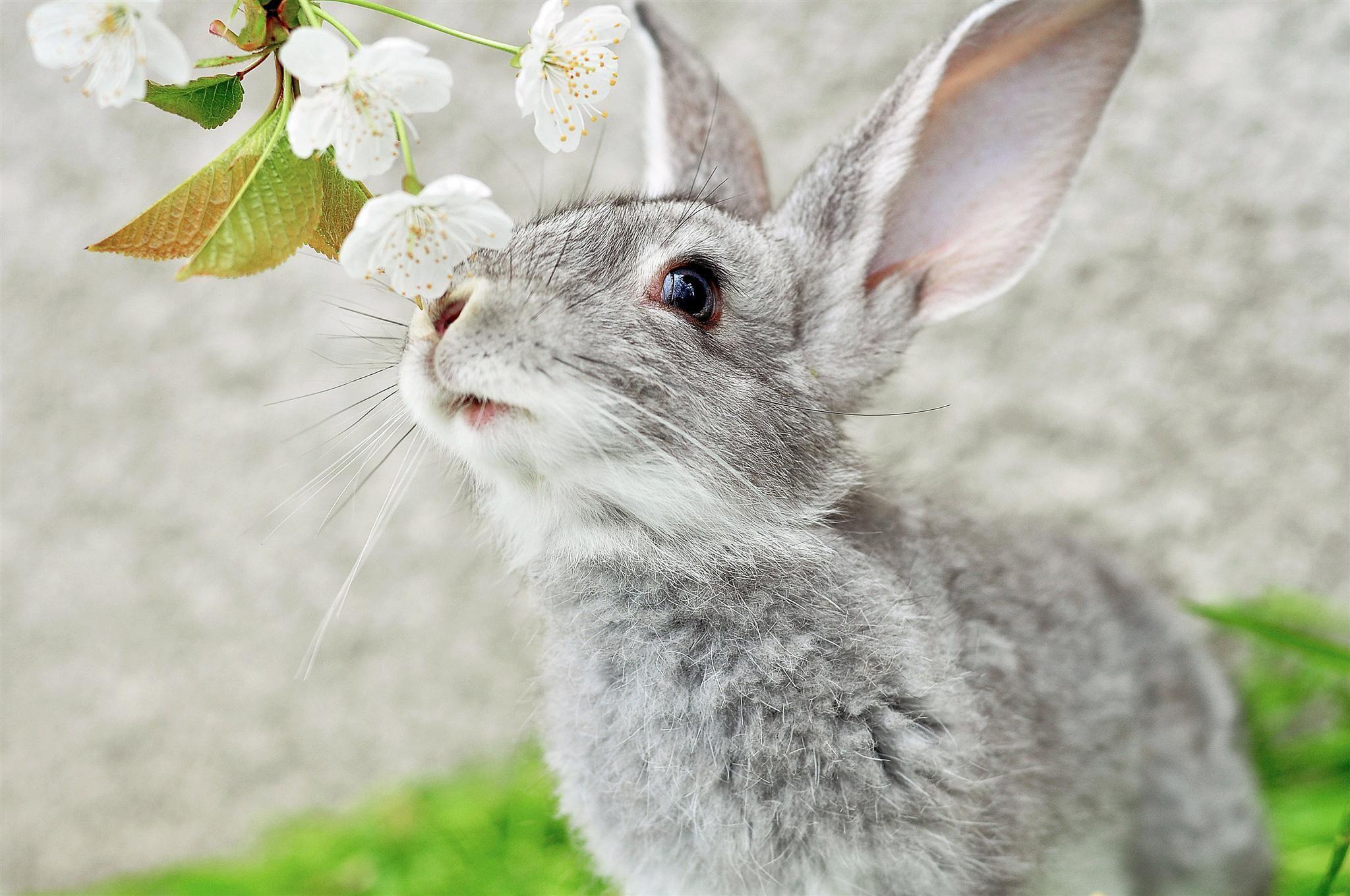 best images about Rabbits on Pinterest Animaux Rabbit