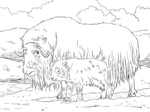 Musk ox Mother and Baby Coloring