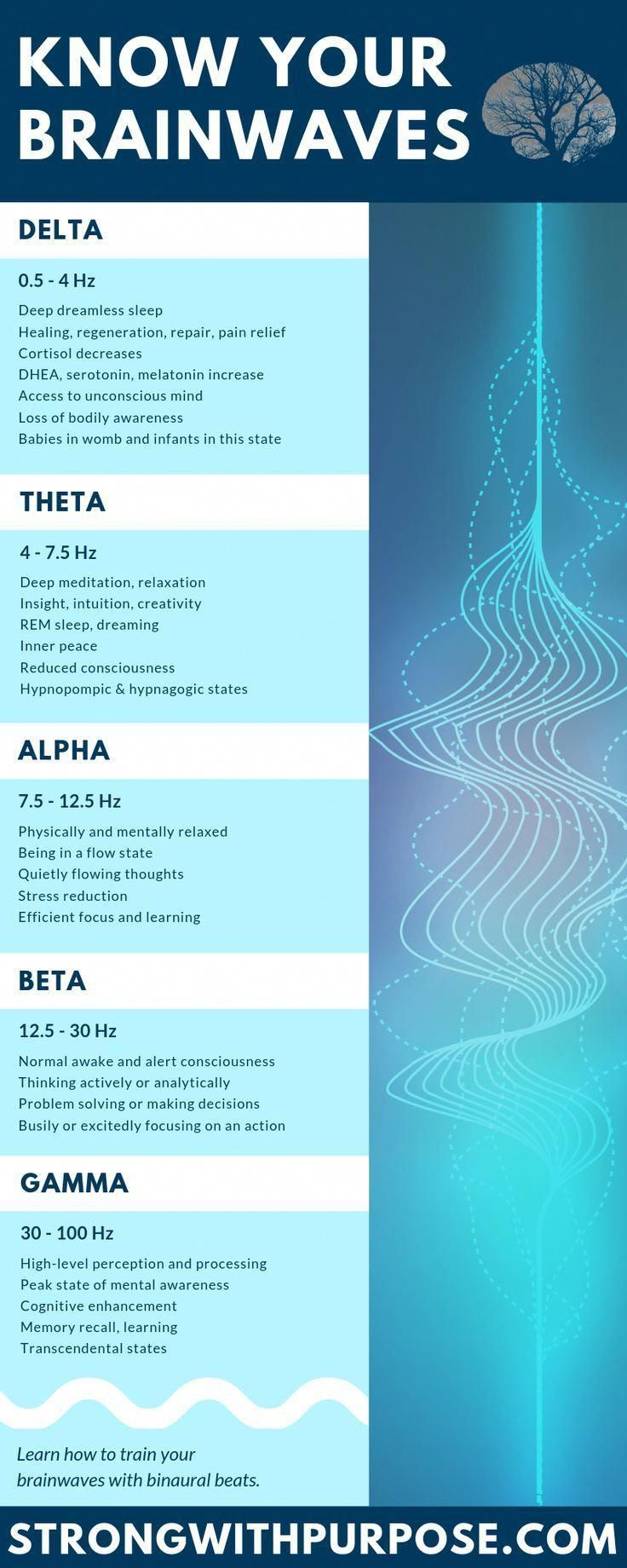 Infographic about delta theta alpha beta and gamma brainwaves Learn more about the science of brainwaves and binaural beats