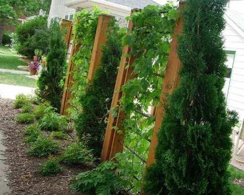 Great gardening idea!