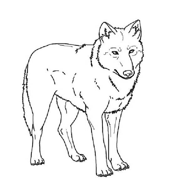 Wolf Coloring Book Pages | warnai.net | animal coloring book ...