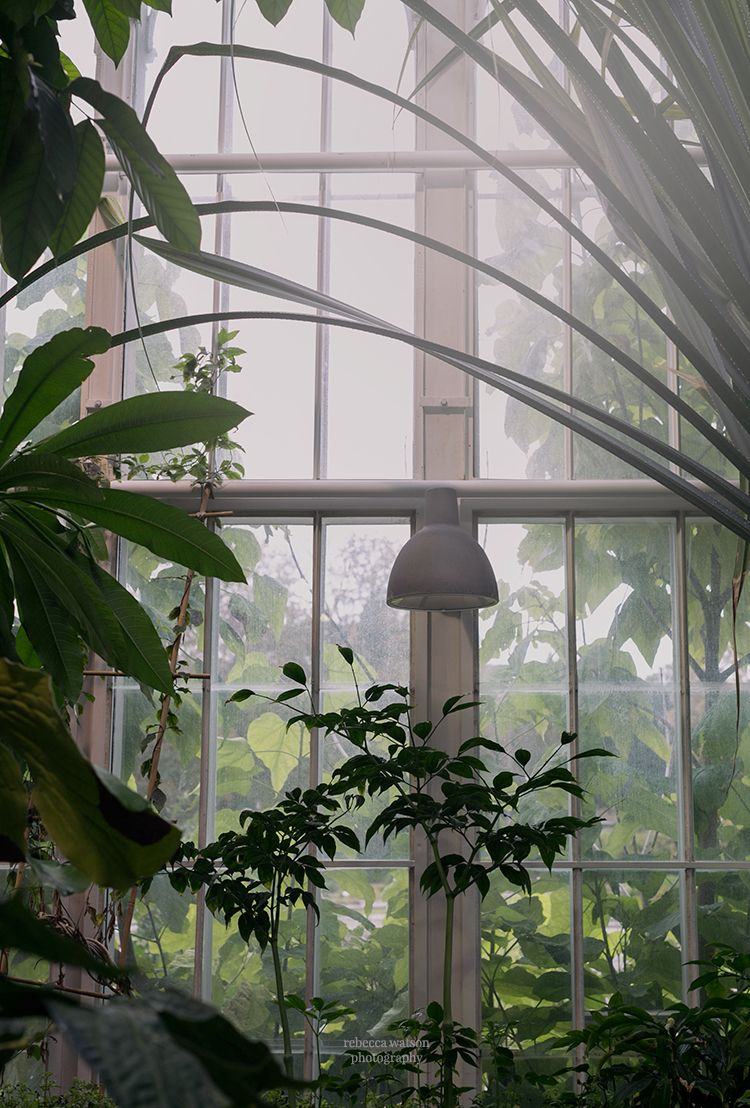 sanctuary jungle fever greenhouse conservatory orangery