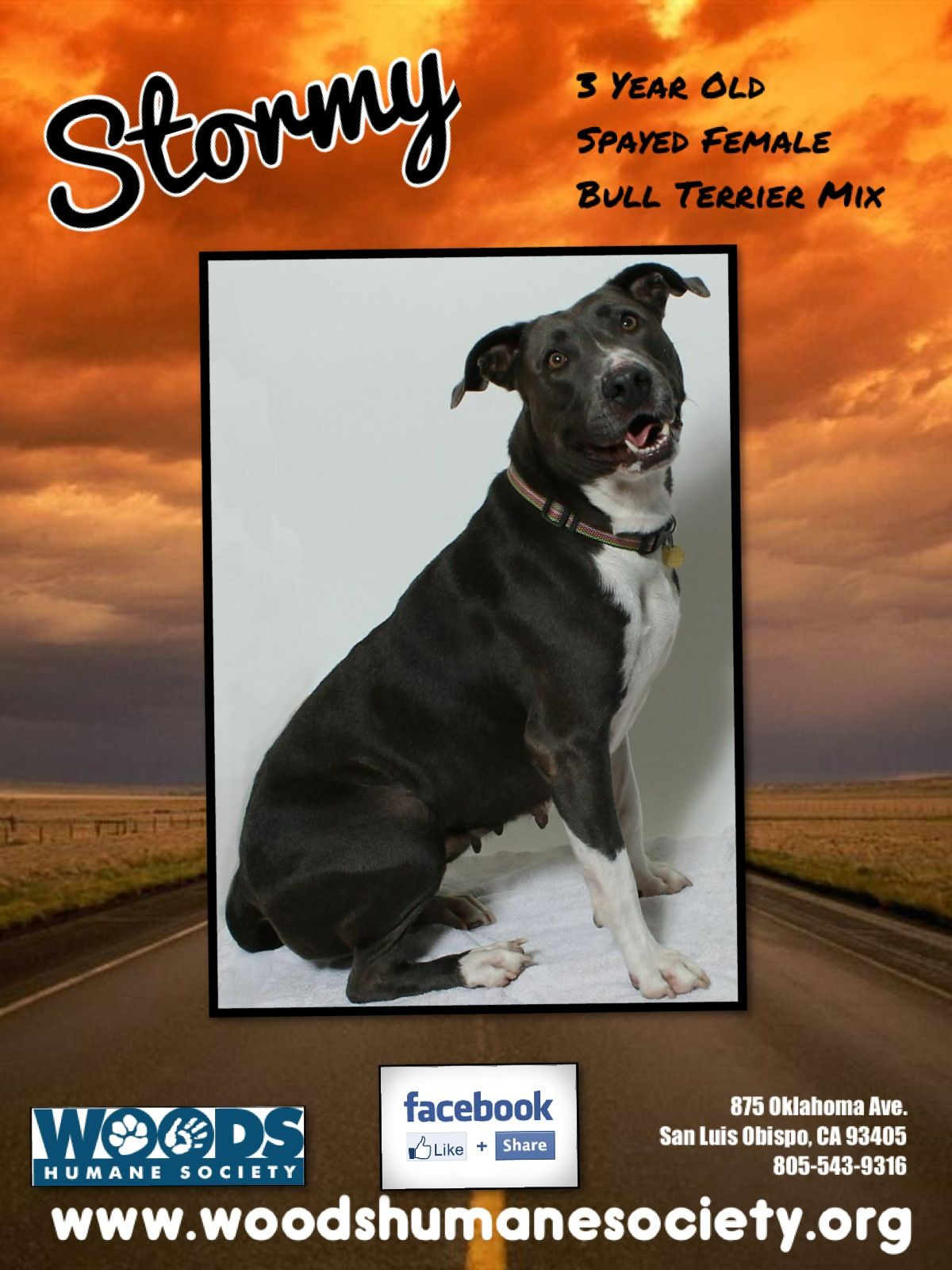 StormyOur Pet Pal of the Week Humane society, Bull