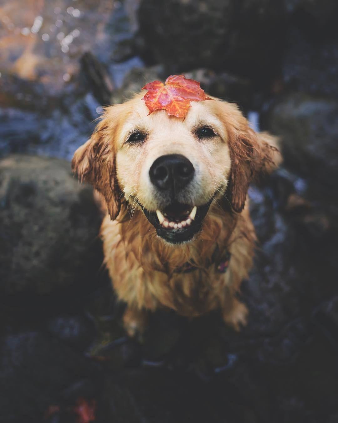 Dogs 101 Labrador Retriever Via Youtube Labrador Retriever