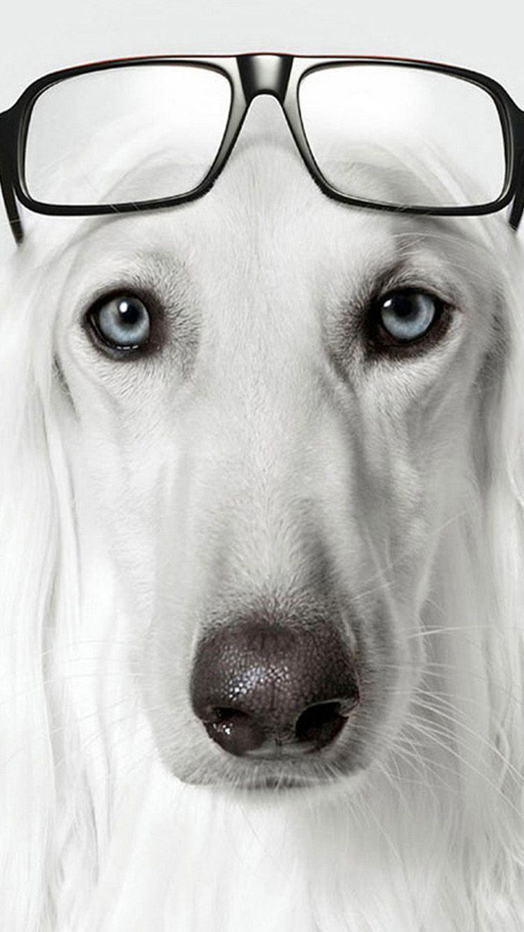 Dog wearing glasses iPhone 6 Wallpapers Brillen