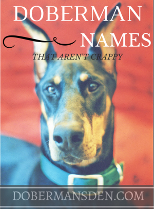 doberman names that are original unique
