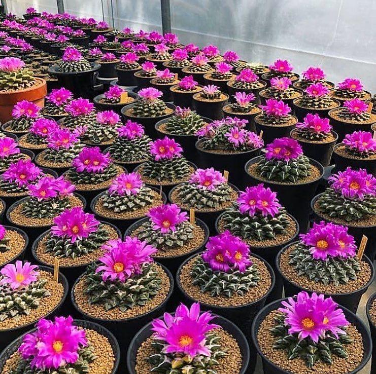 Pin De Shania Brielle En Flswers Suculentas Cactus