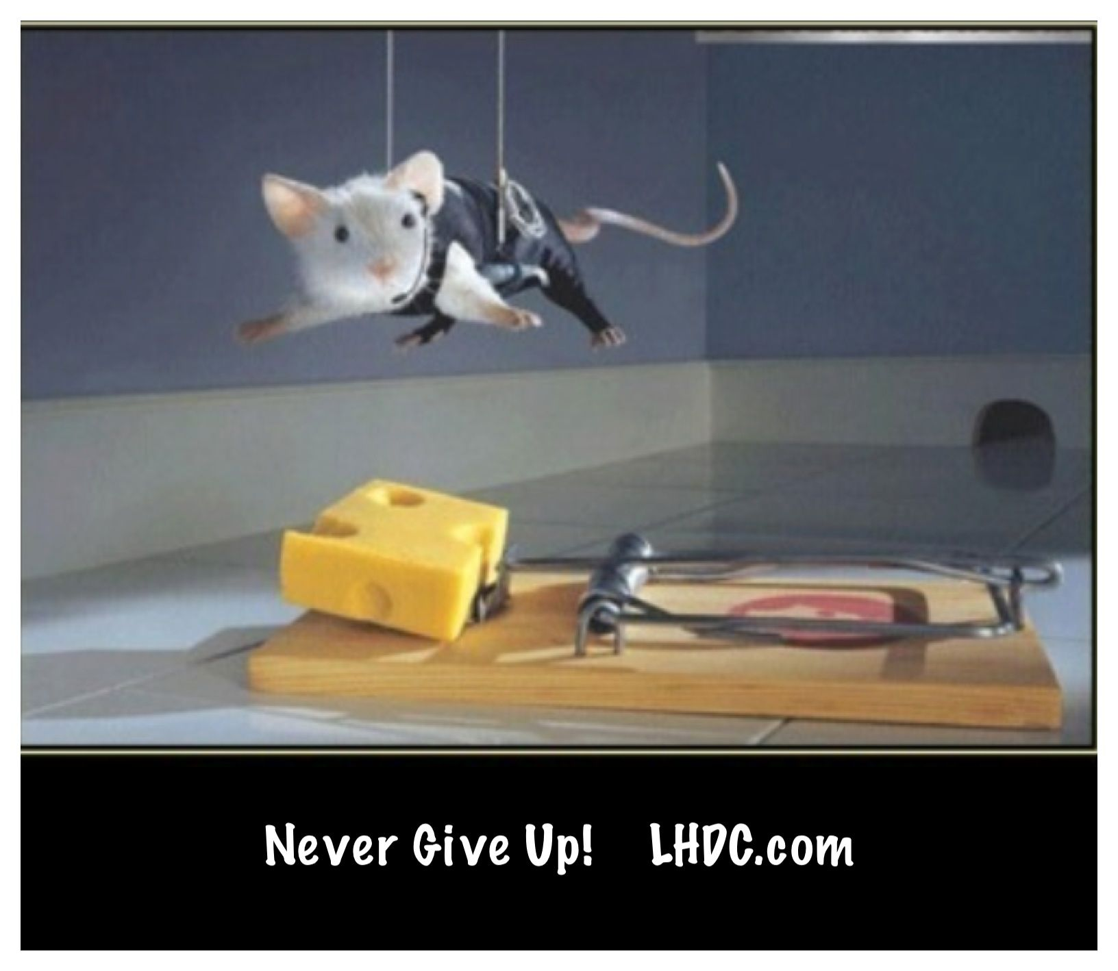 Never give up! Animals doing funny